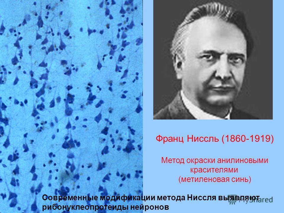 Франц Ниссль (1860-1919) Метод окраски анилиновыми красителями (метиленовая синь) Современные модификации метода Ниссля выявляют рибонуклеопротеиды нейронов