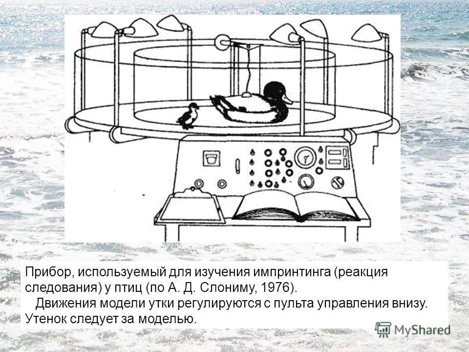 Прибор, используемый для изучения импринтинга (реакция следования) у птиц (по А. Д. Слониму, 1976). Движения модели утки регулируются с пульта управления внизу. Утенок следует за моделью.