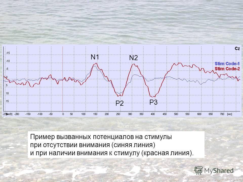 Пример вызванных потенциалов на стимулы при отсутствии внимания (синяя линия) и при наличии внимания к стимулу (красная линия). P3 N1 P2 N2