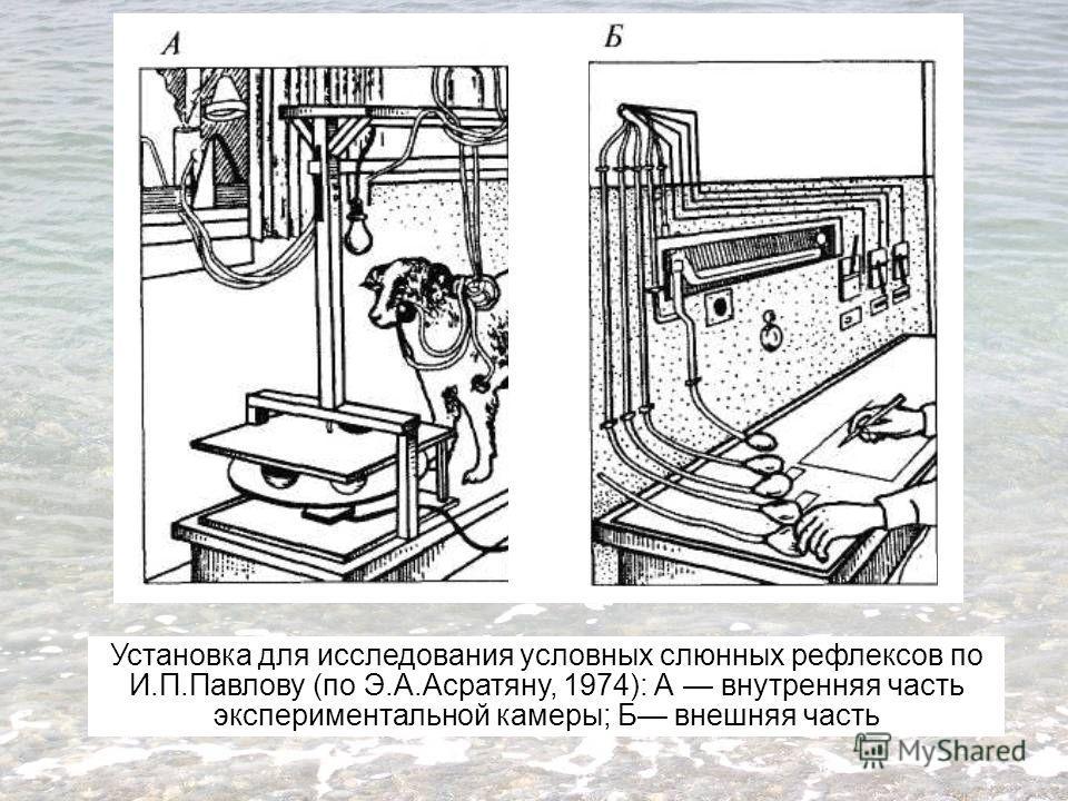 Установка для исследования условных слюнных рефлексов по И.П.Павлову (по Э.А.Асратяну, 1974): А внутренняя часть экспериментальной камеры; Б внешняя часть