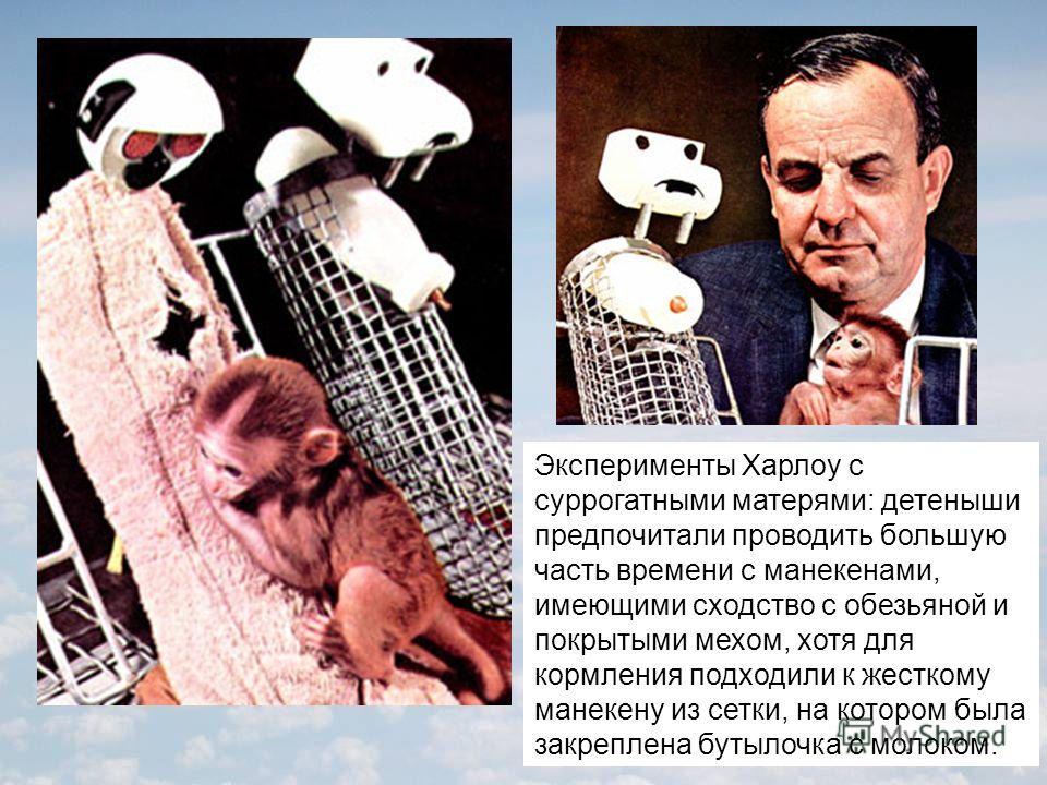 Эксперименты Харлоу с суррогатными матерями: детеныши предпочитали проводить большую часть времени с манекенами, имеющими сходство с обезьяной и покрытыми мехом, хотя для кормления подходили к жесткому манекену из сетки, на котором была закреплена бу