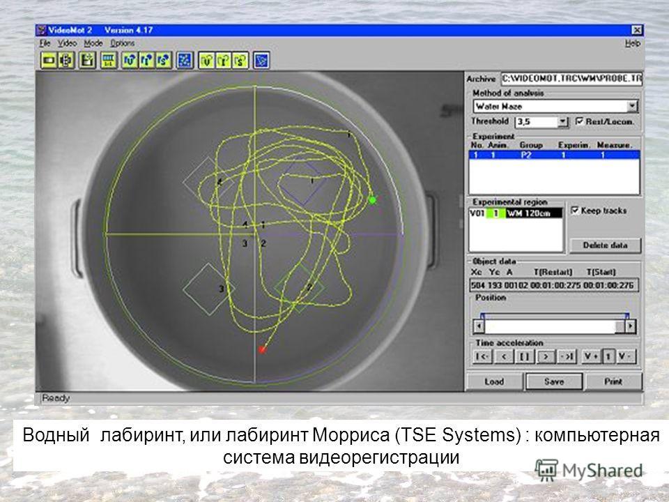 Водный лабиринт, или лабиринт Морриса (TSE Systems) : компьютерная система видеорегистрации