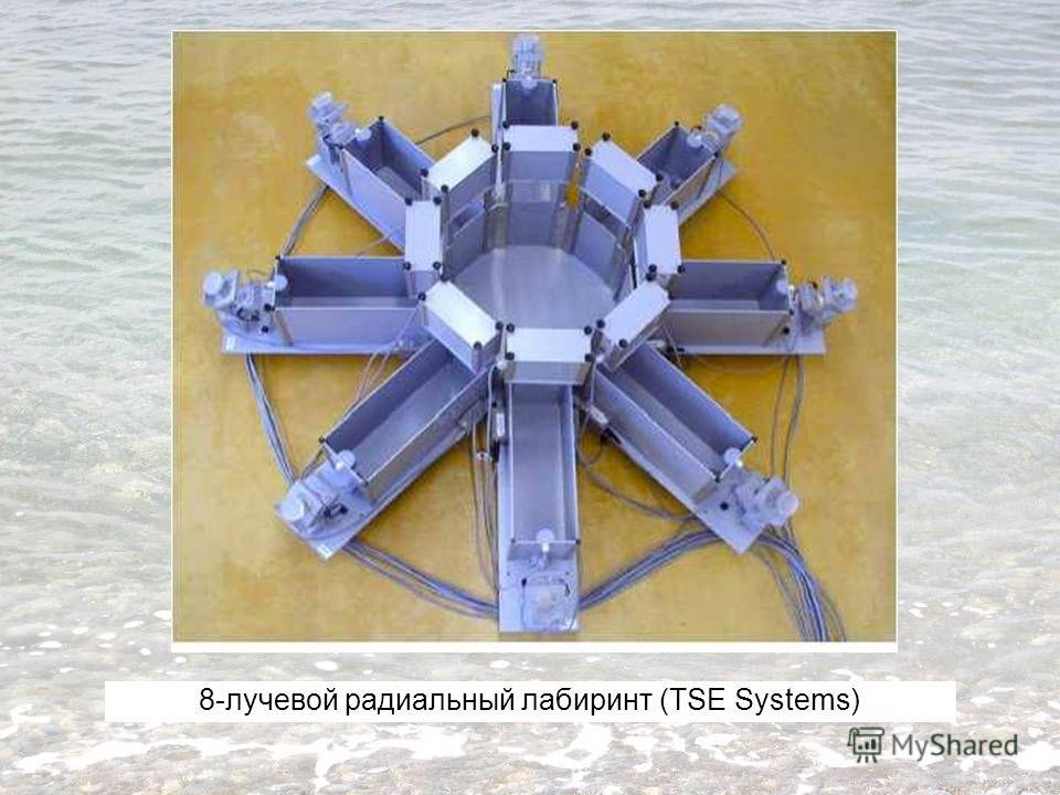 8-лучевой радиальный лабиринт (TSE Systems)