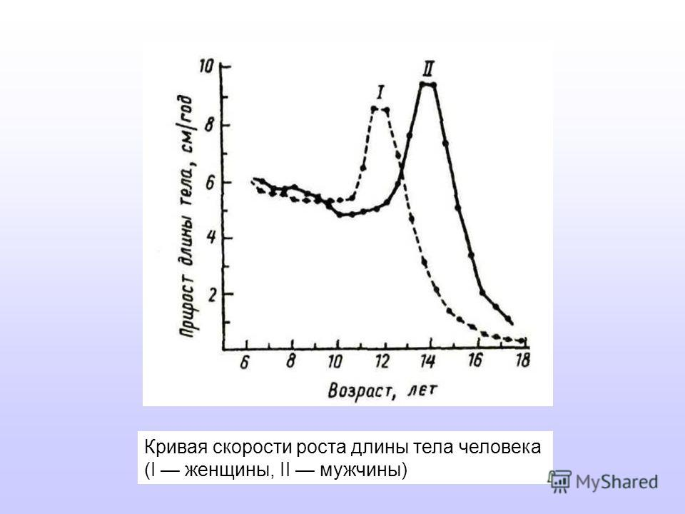 Кривая скорости роста длины тела человека (I женщины, II мужчины)