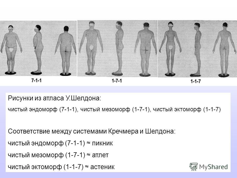 Рисунки из атласа У.Шелдона: чистый эндоморф (7-1-1), чистый мезоморф (1-7-1), чистый эктоморф (1-1-7) Соответствие между системами Кречмера и Шелдона: чистый эндоморф (7-1-1) пикник чистый мезоморф (1-7-1) атлет чистый эктоморф (1-1-7) астеник