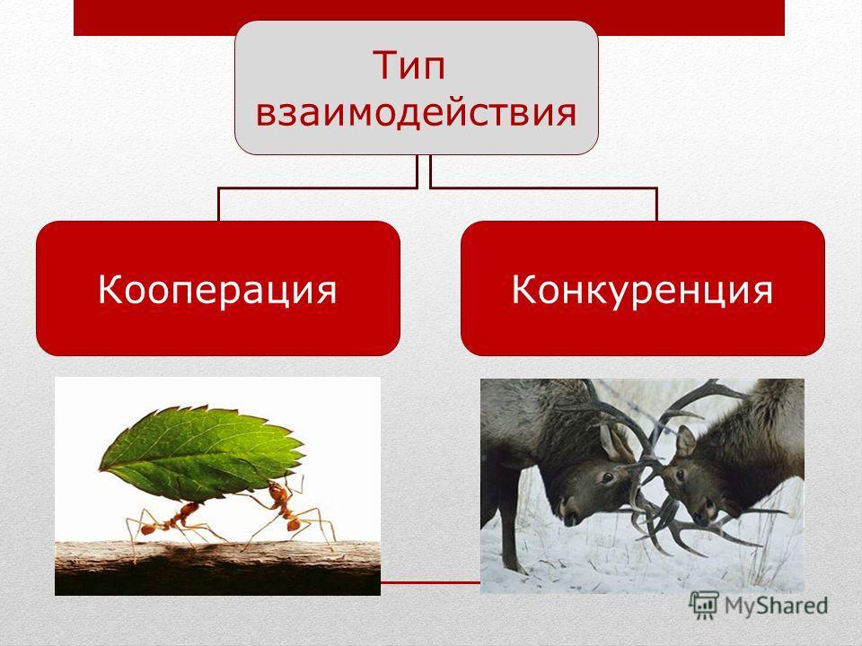 Тип взаимодействия КооперацияКонкуренция