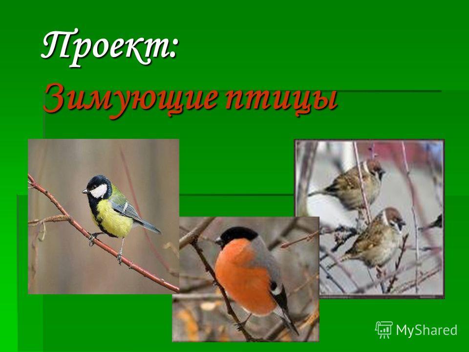 Проект: Зимующие птицы