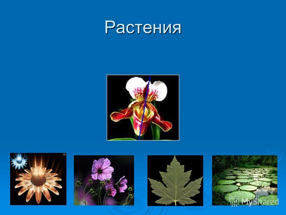 Отражение Первый пример симметрии в природе - это отражение