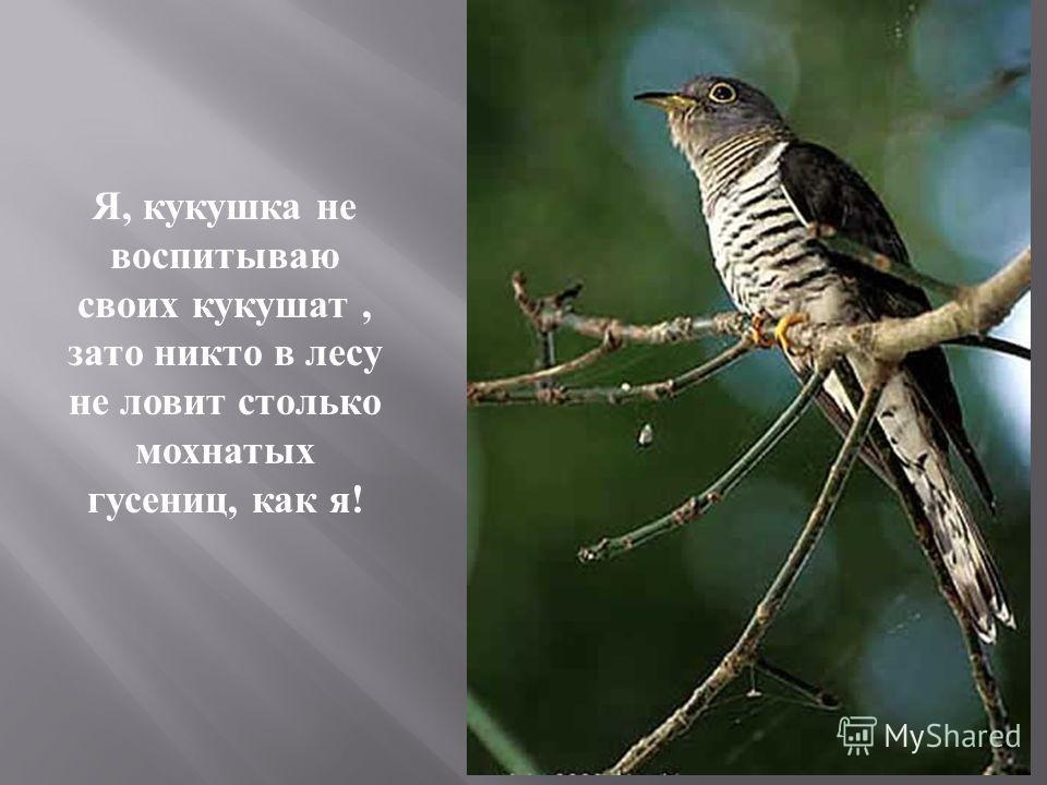 Я, кукушка не воспитываю своих кукушат, зато никто в лесу не ловит столько мохнатых гусениц, как я !