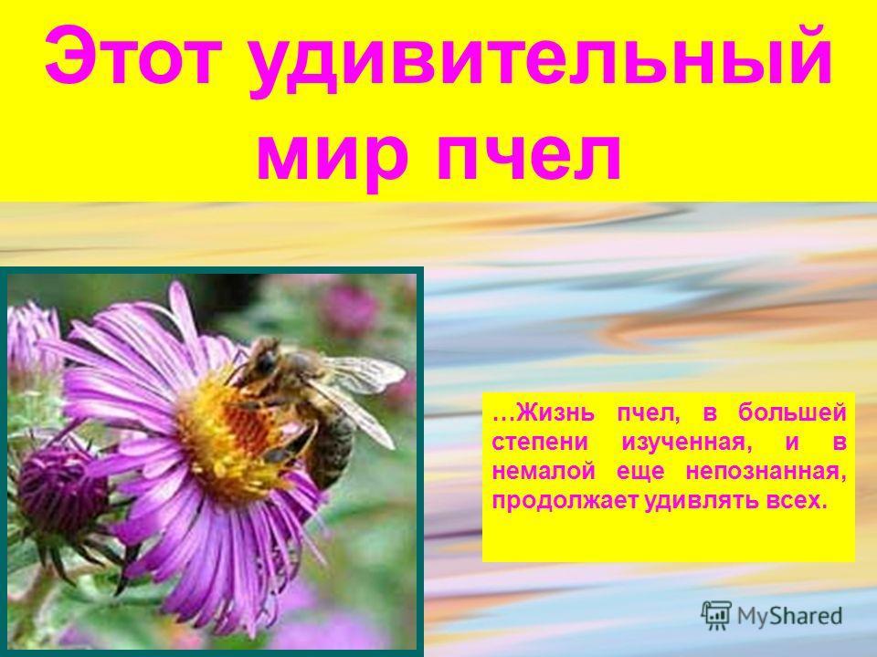 Этот удивительный мир пчел …Жизнь пчел, в большей степени изученная, и в немалой еще непознанная, продолжает удивлять всех.