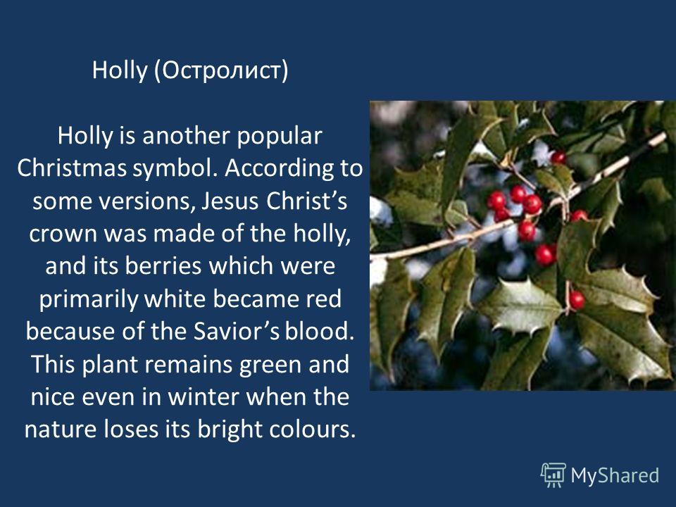 Пуансеттия Poinsettia is a very nice Mexican plant, which is often used for Christmas decorations. Thanks to the form of its leaves poinsettia has become the symbol of the Bethlehem star and is associated with Christmas. Poinsettia (Пуансеттия )