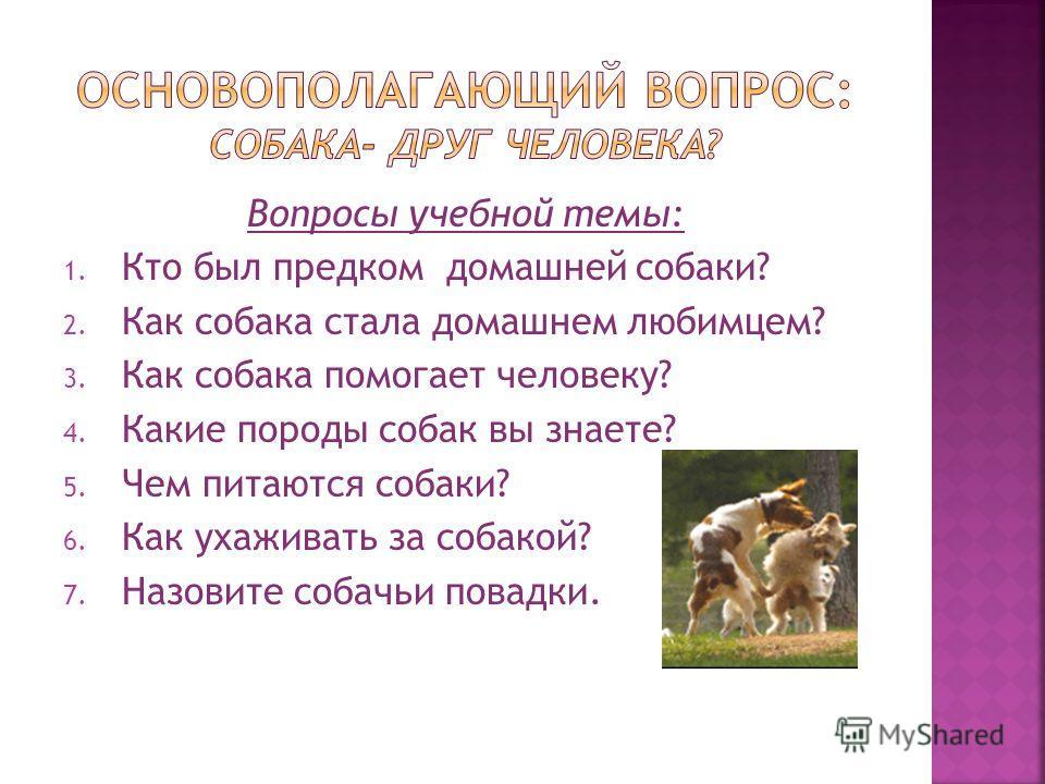 Вопросы учебной темы: 1. Кто был предком домашней собаки? 2. Как собака стала домашнем любимцем? 3. Как собака помогает человеку? 4. Какие породы собак вы знаете? 5. Чем питаются собаки? 6. Как ухаживать за собакой? 7. Назовите собачьи повадки.
