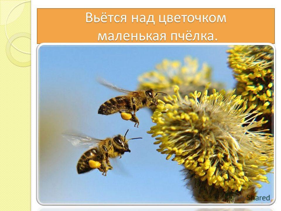 Вьётся над цветочком маленькая пчёлка.