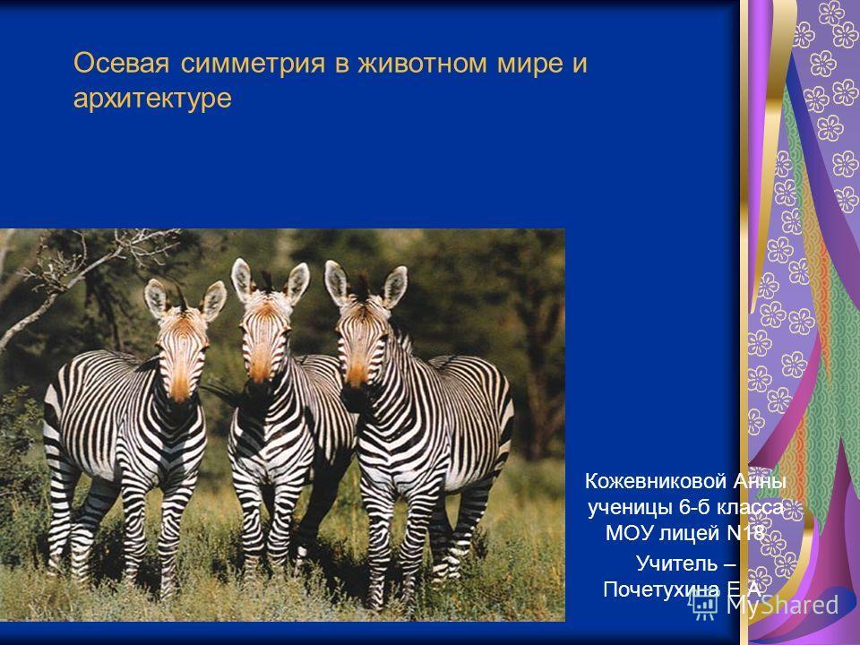 Осевая симметрия в животном мире и архитектуре Кожевниковой Анны ученицы 6-б класса МОУ лицей N18 Учитель – Почетухина Е.А.