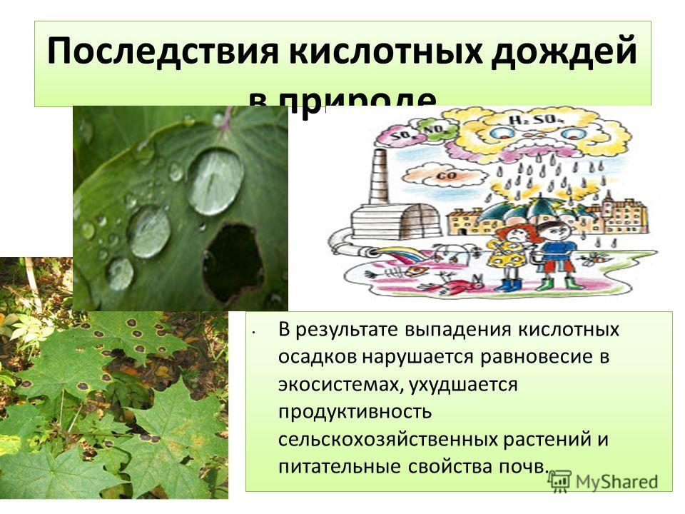 Последствия кислотных дождей в природе В результате выпадения кислотных осадков нарушается равновесие в экосистемах, ухудшается продуктивность сельскохозяйственных растений и питательные свойства почв.