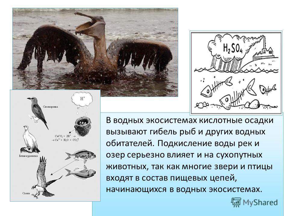 В водных экосистемах кислотные осадки вызывают гибель рыб и других водных обитателей. Подкисление воды рек и озер серьезно влияет и на сухопутных животных, так как многие звери и птицы входят в состав пищевых цепей, начинающихся в водных экосистемах.