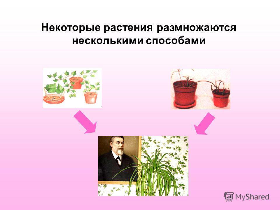 Некоторые растения размножаются несколькими способами