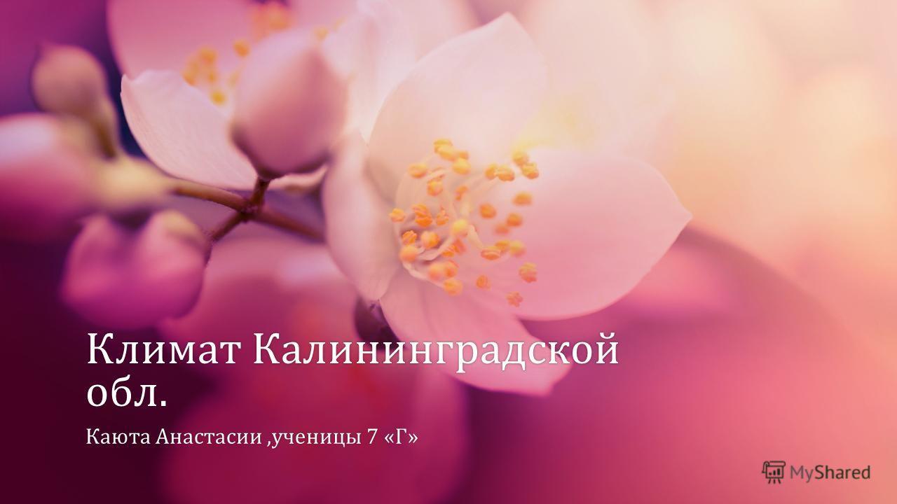 Климат Калининградской обл. Каюта Анастасии,ученицы 7 «Г»Каюта Анастасии,ученицы 7 «Г»