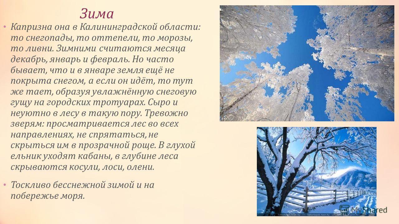 Зима Капризна она в Калининградской области: то снегопады, то оттепели, то морозы, то ливни. Зимними считаются месяца декабрь, январь и февраль. Но часто бывает, что и в январе земля ещё не покрыта снегом, а если он идёт, то тут же тает, образуя увла