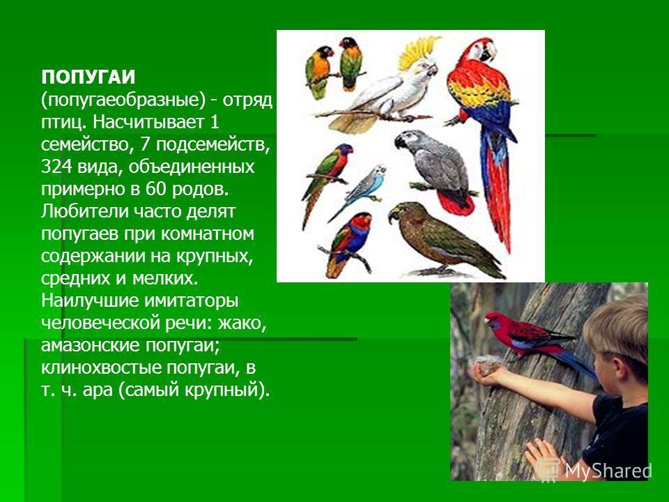 ПОПУГАИ (попугаеобразные) - отряд птиц. Насчитывает 1 семейство, 7 подсемейств, 324 вида, объединенных примерно в 60 родов. Любители часто делят попугаев при комнатном содержании на крупных, средних и мелких. Наилучшие имитаторы человеческой речи: жа