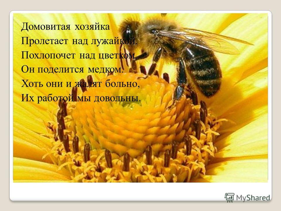 Домовитая хозяйка Пролетает над лужайкой. Похлопочет над цветком – Он поделится медком. Хоть они и жалят больно, Их работой мы довольны.