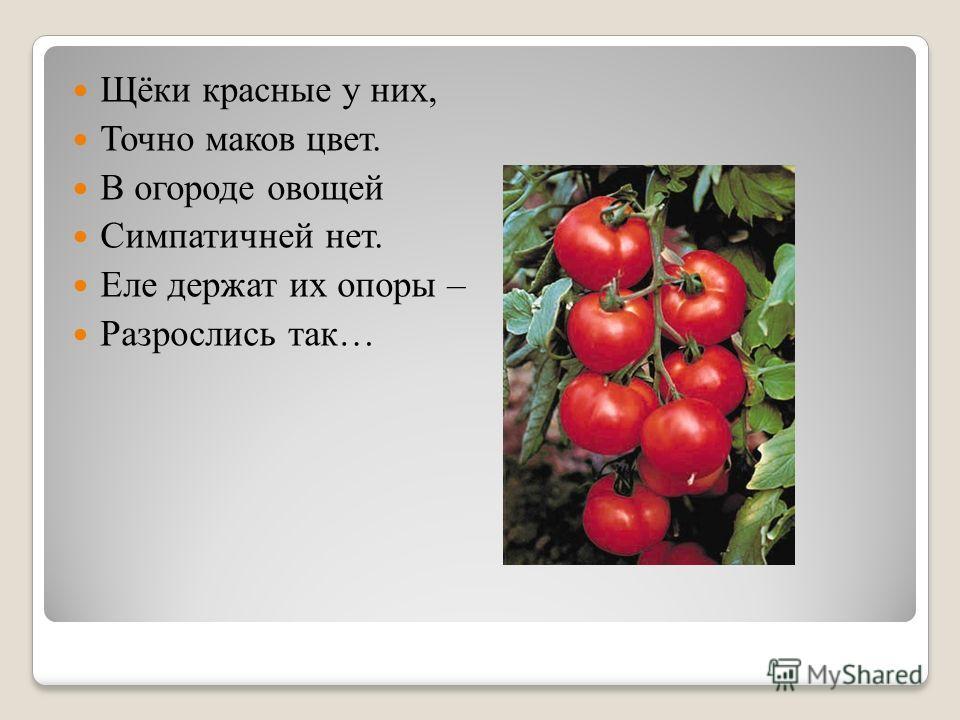 Щёки красные у них, Точно маков цвет. В огороде овощей Симпатичней нет. Еле держат их опоры – Разрослись так…