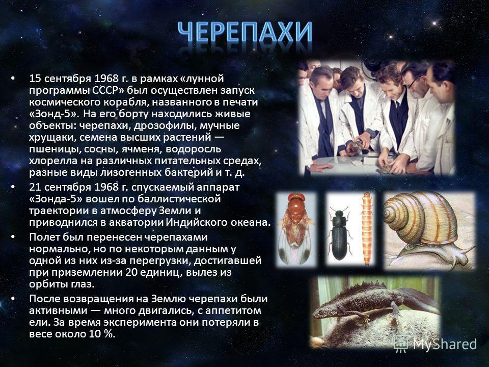 15 сентября 1968 г. в рамках «лунной программы СССР» был осуществлен запуск космического корабля, названного в печати «Зонд-5». На его борту находились живые объекты: черепахи, дрозофилы, мучные хрущаки, семена высших растений пшеницы, сосны, ячменя,
