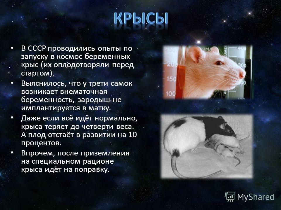 В СССР проводились опыты по запуску в космос беременных крыс (их оплодотворяли перед стартом). Выяснилось, что у трети самок возникает внематочная беременность, зародыш не имплантируется в матку. Даже если всё идёт нормально, крыса теряет до четверти