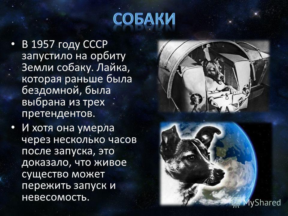 В 1957 году СССР запустило на орбиту Земли собаку. Лайка, которая раньше была бездомной, была выбрана из трех претендентов. И хотя она умерла через несколько часов после запуска, это доказало, что живое существо может пережить запуск и невесомость.