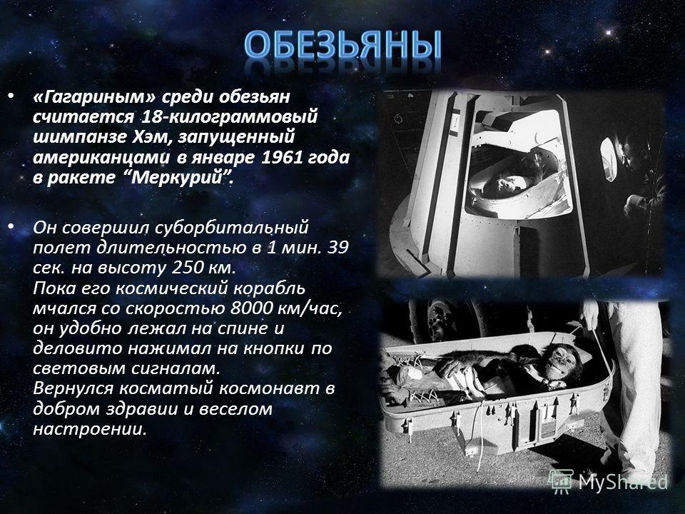 «Гагариным» среди обезьян считается 18-килограммовый шимпанзе Хэм, запущенный американцами в январе 1961 года в ракете Меркурий. Он совершил суборбитальный полет длительностью в 1 мин. 39 сек. на высоту 250 км. Пока его космический корабль мчался со