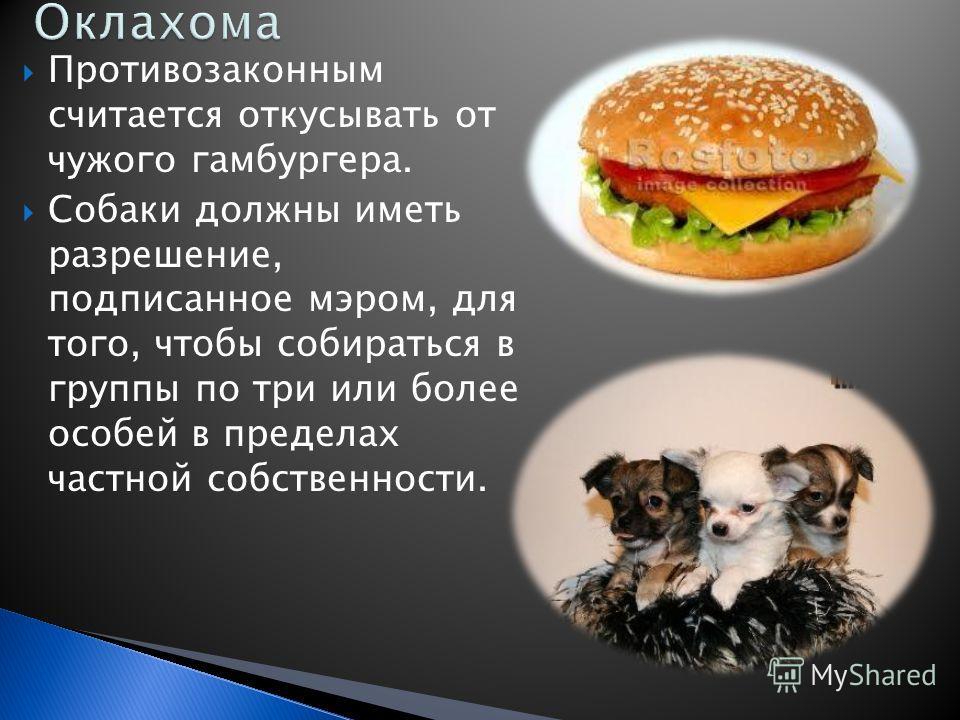 Противозаконным считается откусывать от чужого гамбургера. Собаки должны иметь разрешение, подписанное мэром, для того, чтобы собираться в группы по три или более особей в пределах частной собственности.