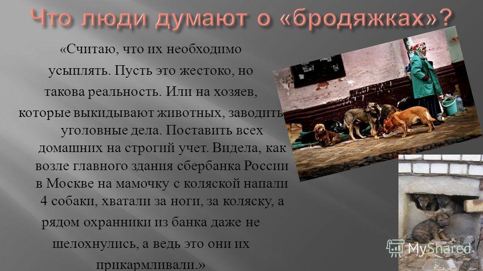« Считаю, что их необходимо усыплять. Пусть это жестоко, но такова реальность. Или на хозяев, которые выкидывают животных, заводить уголовные дела. Поставить всех домашних на строгий учет. Видела, как возле главного здания сбербанка России в Москве н