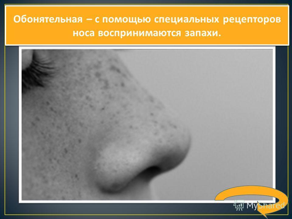 Обонятельная – с помощью специальных рецепторов носа воспринимаются запахи.