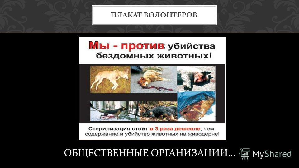 ОБЩЕСТВЕННЫЕ ОРГАНИЗАЦИИ … ПЛАКАТ ВОЛОНТЕРОВ
