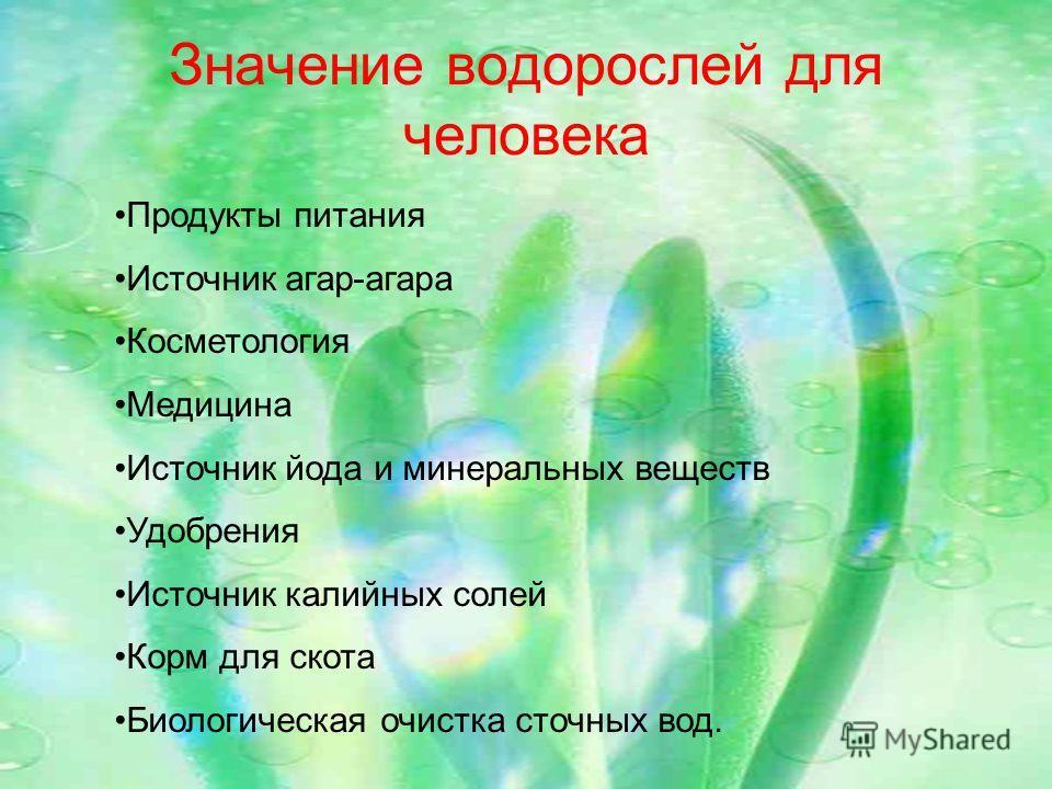Значение водорослей для человека Продукты питания Источник агар-агара Косметология Медицина Источник йода и минеральных веществ Удобрения Источник калийных солей Корм для скота Биологическая очистка сточных вод.
