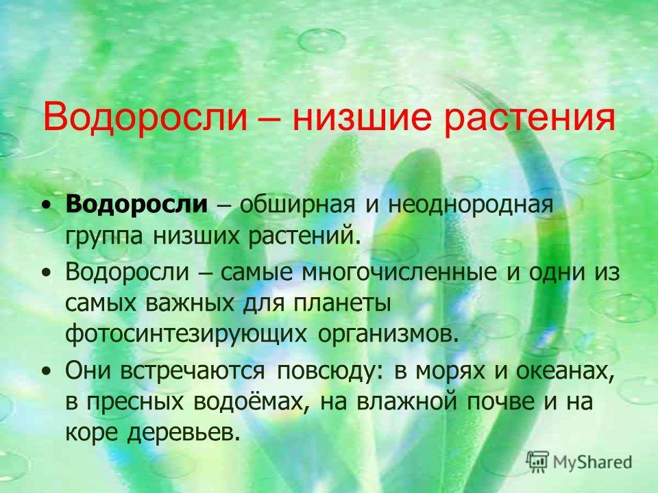 Водоросли – низшие растения Водоросли – обширная и неоднородная группа низших растений. Водоросли – самые многочисленные и одни из самых важных для планеты фотосинтезирующих организмов. Они встречаются повсюду: в морях и океанах, в пресных водоёмах,