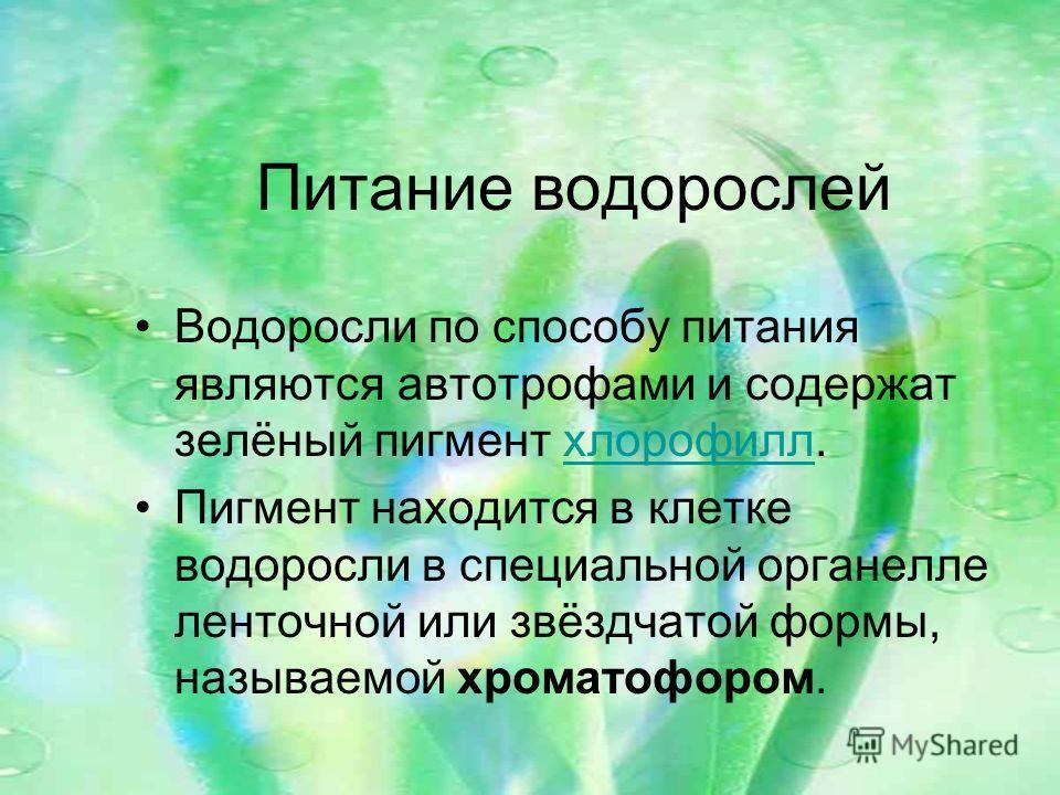 Питание водорослей Водоросли по способу питания являются автотрофами и содержат зелёный пигмент хлорофилл.хлорофилл Пигмент находится в клетке водоросли в специальной органелле ленточной или звёздчатой формы, называемой хроматофором.