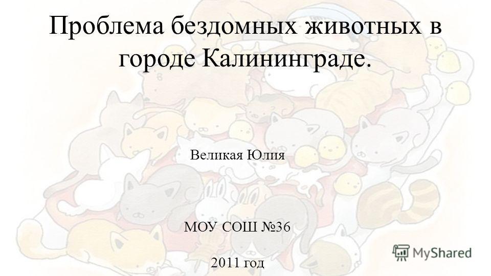 Проблема бездомных животных в городе Калининграде. Великая Юлия МОУ СОШ 36 2011 год