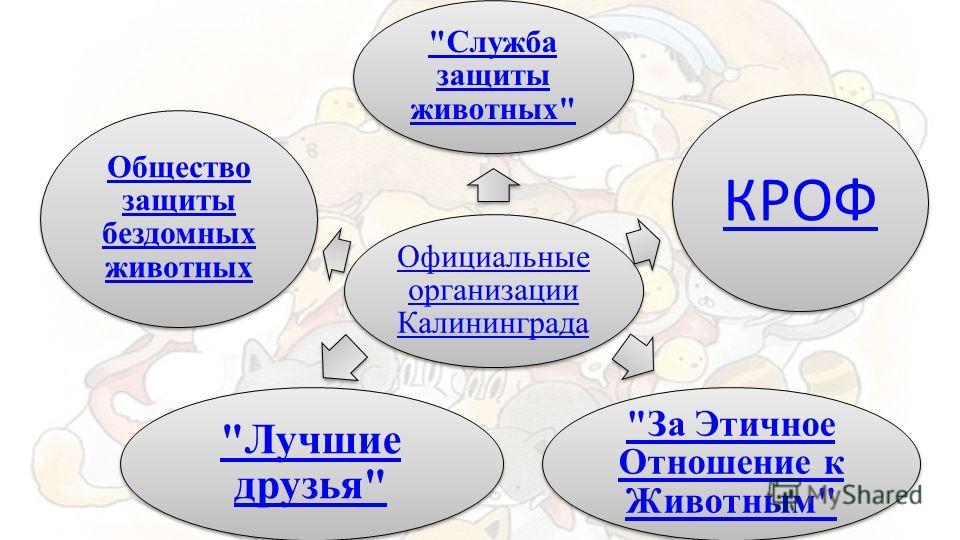 Официальные организации Калининграда Служба защиты животных КРОФ За Этичное Отношение к Животным Лучшие друзья Общество защиты бездомных животных