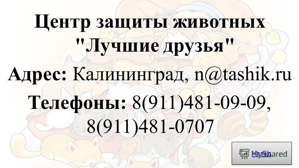 Центр защиты животных Лучшие друзья Адрес: Калининград, n@tashik.ru Телефоны: 8(911)481-09-09, 8(911)481-0707 Назад
