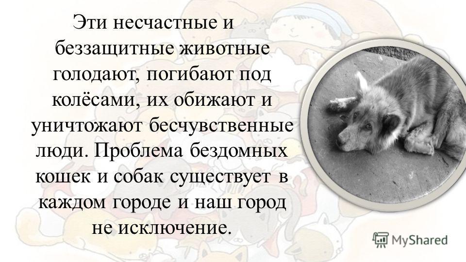 Эти несчастные и беззащитные животные голодают, погибают под колёсами, их обижают и уничтожают бесчувственные люди. Проблема бездомных кошек и собак существует в каждом городе и наш город не исключение.