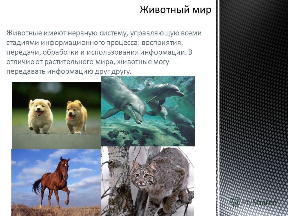 Животные имеют нервную систему, управляющую всеми стадиями информационного процесса: восприятия, передачи, обработки и использования информации. В отличие от растительного мира, животные могу передавать информацию друг другу.