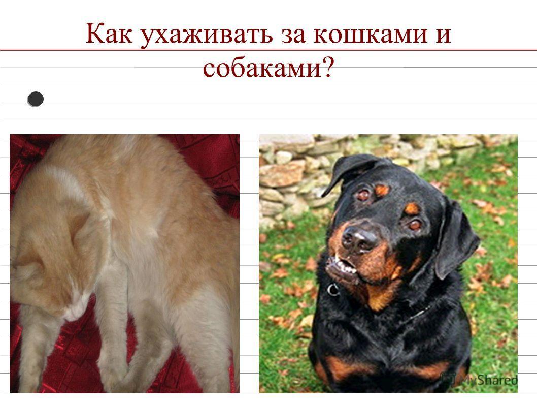 Как ухаживать за кошками и собаками?