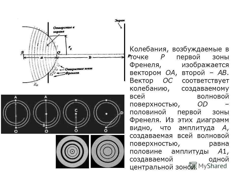 Колебания, возбуждаемые в точке P первой зоны Френеля, изображается вектором OA, второй – AB. Вектор OC соответствует колебанию, создаваемому всей волновой поверхностью, OD – половиной первой зоны Френеля. Из этих диаграмм видно, что амплитуда A, соз