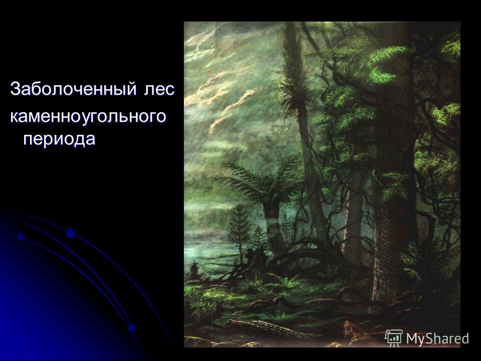 Заболоченный лес Заболоченный лес каменноугольного периода каменноугольного периода