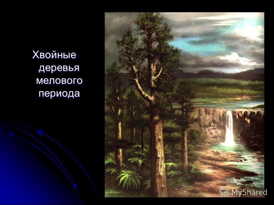 Хвойные деревья мелового периода
