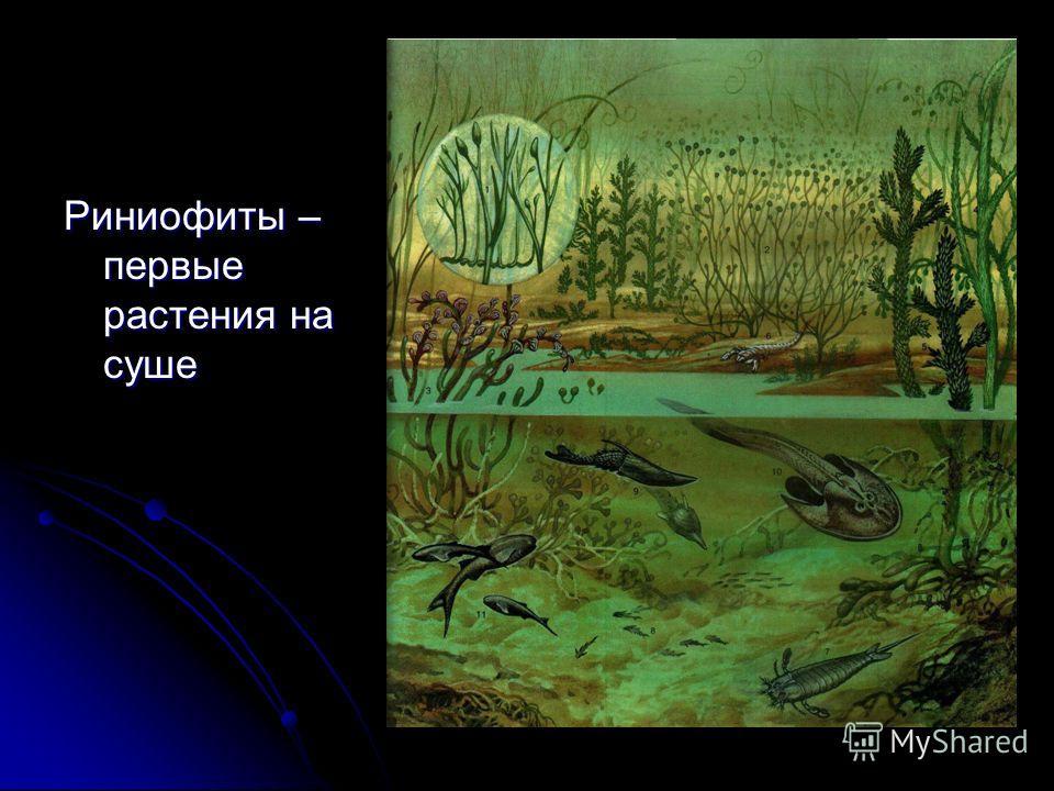 Риниофиты – первые растения на суше