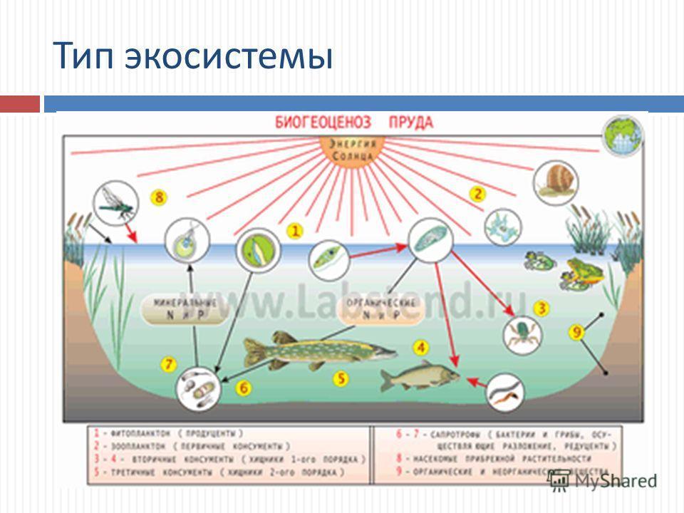 Тип экосистемы