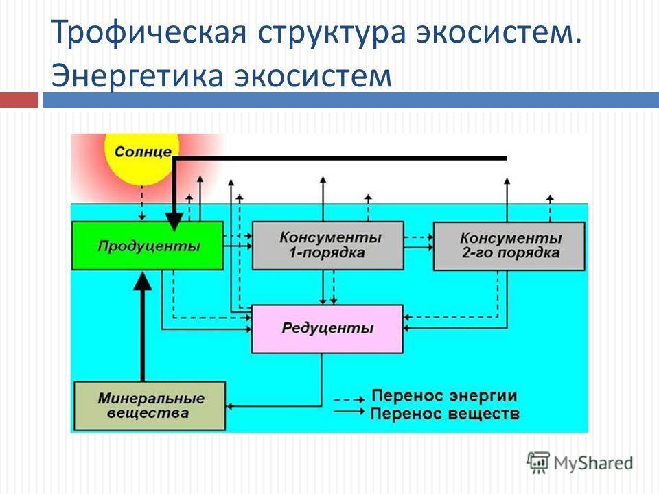 Трофическая структура экосистем. Энергетика экосистем