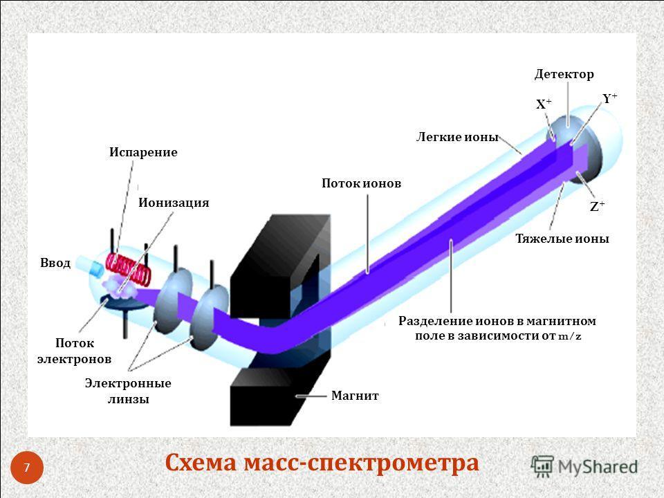 Ввод Испарение Ионизация Поток электронов Электронные линзы Магнит Поток ионов Разделение ионов в магнитном поле в зависимости от m/z Детектор Легкие ионы Тяжелые ионы X+X+ Y+Y+ Z+Z+ Схема масс - спектрометра 7